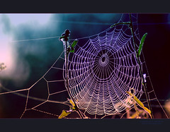 - A T T R A Z I O N I  P E R I C O L O S E -  (the suspended death) (swaily  Claudio Parente) Tags: nikon blu web nikond50 tela ragnatela claudioparente swaily checchino saariysqualitypictures bestcapturesaoi elitegalleryaoi galleryoffantasticshots aboveandbeyondlevel1