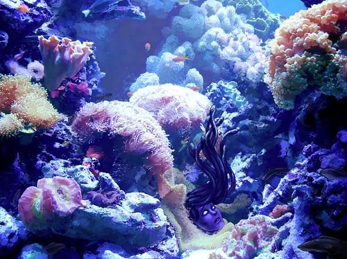 medusa stage 4