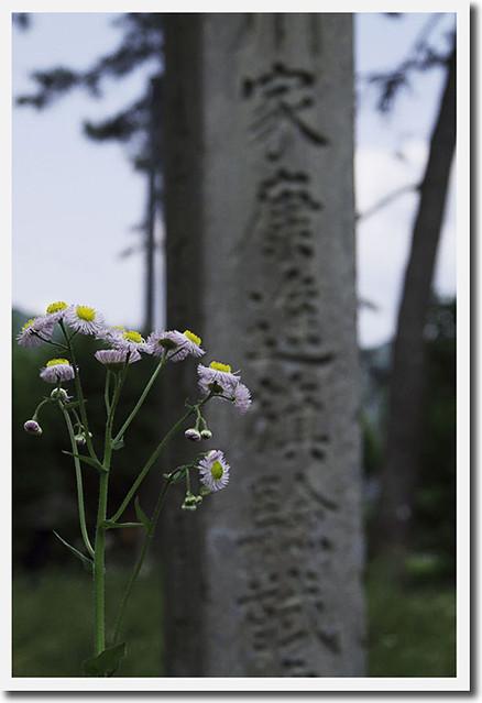 110521_125835_関ヶ原_徳川家康最後の陣地跡