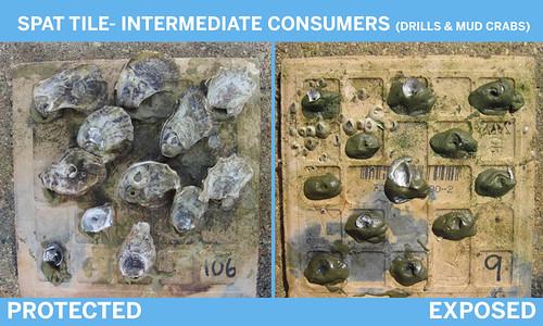consumers-2box