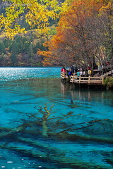 Under The Lake (nawapa) Tags: china travel autumn lake flower color tree landscape ancient view five scenic valley fallen trunk sichuan jiuzhaigou 2011 nanping nawapa