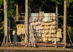 Stockage / Storage (patoche21) Tags: japan nikon asia rice farm country asie agriculture ricefield campagne japon ferme riz 18200mm nojiriko rizire d80 nikonpassion patrickbouchenard