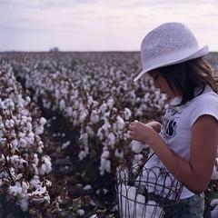 more cotton field fun (GoneApey) Tags: california color mamiya c220 field kodak merced f45 55mm cotton 400 400uc ultra