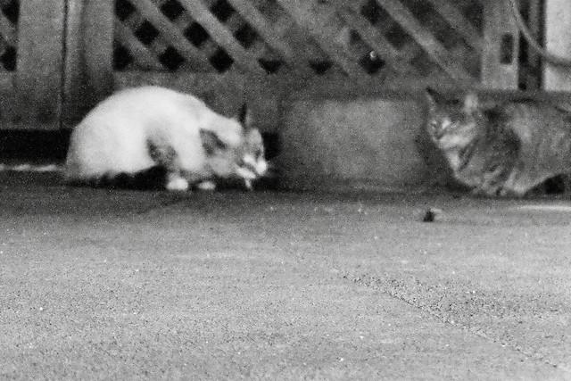 Today's Cat@2011-10-12