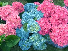 Flores 18 (VRNU) Tags: flores vrnu floresporlapaz mygearandme