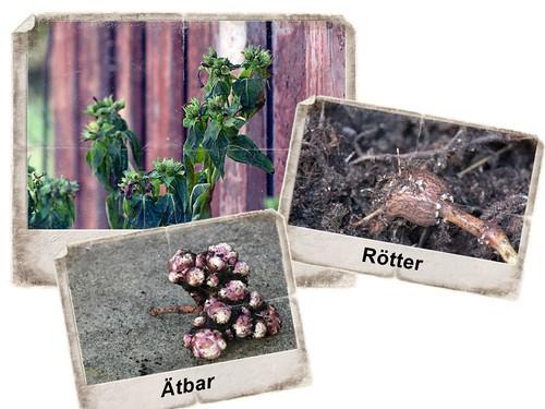 Rötter (265 av 365)