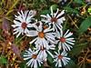Regali di Ottobre! (fata_ci) Tags: flower macro verde natura fiori bosco ottobre ysplix