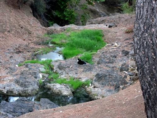 creek cat