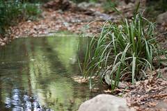 (zitronenkojote) Tags: river waterfall wasserfall bach greece griechenland tal samos karlovassi potami griechischeinseln potamiwasserfall