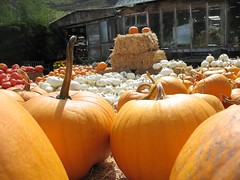 Go ahead and pick your pumpkin (janetfo747) Tags: california orange house halloween nature rural farm pumpkins haunted hay scarry pumpkinhalfmoonbay