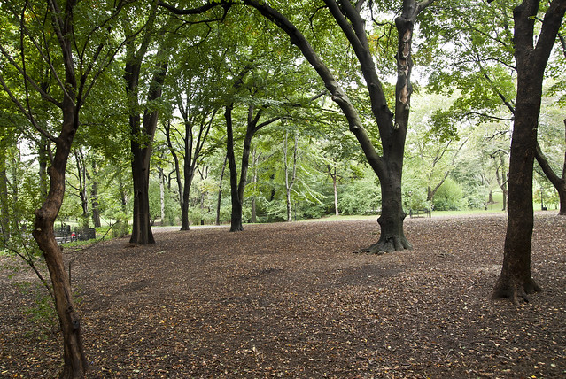 """Central Park • <a style=""""font-size:0.8em;"""" href=""""http://www.flickr.com/photos/32810496@N04/6272172474/"""" target=""""_blank"""">View on Flickr</a>"""