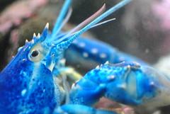 new england aquarium flickr newenglandaquarium