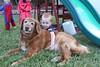 IMG_9060 (drjeeeol) Tags: dog pet halloween goldenretriever costume backyard katie tiger superman charlie superhero cape supergirl fav triplets toddlers 2011 36monthsold