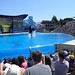 Sea World with SYR - 037