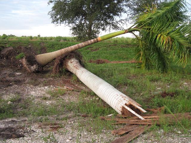 Dead Palm 20111021
