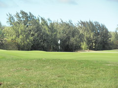 Turtle Bay Colf Course 314