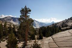 2011-10-15 10-23 Sierra Nevada 334 Yosemite National Park, Olmsted Point