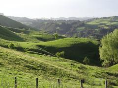 Just off the Taupo Road (Home Land & Sea) Tags: newzealand green rural landscape spring country farmland hills nz rolling sonycybershot hawkesbay hawkesbaynz sooc homelandsea dschx100v