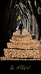 A MAN    (explored 1nov2011 #22) (Claudia Gaiotto) Tags: autumn trees man leaves foglie alberi walking friend autunno giovanni otono viale