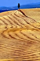 Autunno nelle Crete (Capitan Mirino ( il Tartarughino )) Tags: autumn italy tree country ground campagna siena toscana terra albero autunno cretesenesi