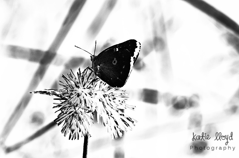 Butterfly-bw-with-abstract
