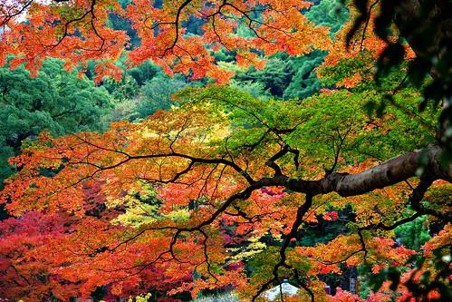 Foliage season.