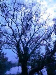 arriva l'inverno (AlexOHara_ON AND OFF!!!) Tags: autumn italy lake tree nature lago italia country natura campagna albero autunno italie paesaggio valpadana