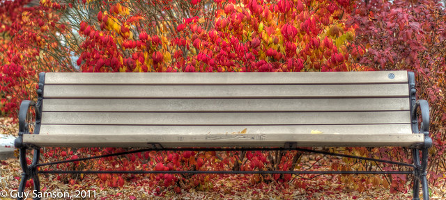Du rouge et un banc de parc / Some Red And A Park Bench