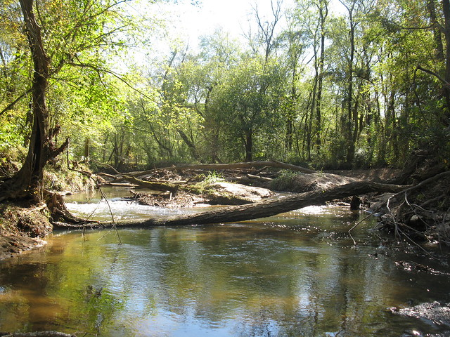 Looking upstream at the big wood jam (photo by A. Jefferson, 2011)