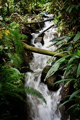 River (sevphoto2) Tags: tree nature water leaves river rocks stream velvia foam tropical rainforrest