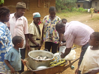Fish selling, Cameroon. Photo by Randall Brummett, 2004