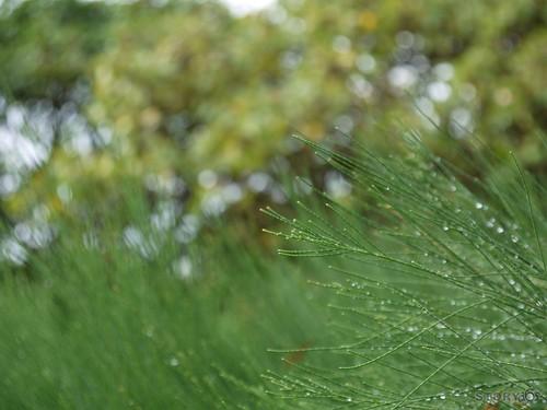 綠油油的植物上有著亮亮的水滴