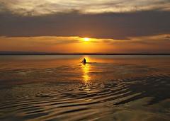 Remando hacia la luz (Jesus_l) Tags: espaa valencia atardecer agua europa reflexions laalbufera jesusl