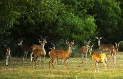 Deers, TX (philippe*) Tags: nikon d2x