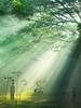 the ray of life (Romio Hasan) Tags: life morning light tree sunshine children nikon ray bangladesh treeoflife wintermorning barisal morningray 30faves30comments300views 50faves50comments500views coolpixp100