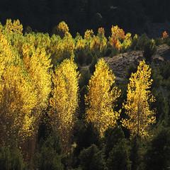 Autumn foliage (Solomulala | mostly weekends ;-( !) Tags: autumn light fall luz canon square de photo foto herfst foliage 7d otoo cuadrado canonautumn solomulala muriel murieldejong