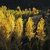 Autumn foliage (Solomulala | mostly weekends ;-( !) Tags: autumn light fall luz canon square de photo foto herfst foliage 7d otoño cuadrado canonautumn solomulala ¨muriel murieldejong