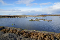 2011-11 San Jose 063 Don Edwards SF Bay National Wildlife Refuge Park
