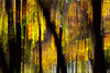 EXPLORED!  Fall Colors / gold / brown / green / - Vertical Pan - IMG_8305-1000 (Bahman Farzad) Tags: brown green fall colors vertical gold pan