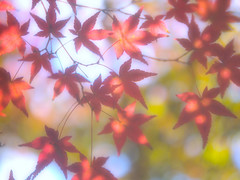 Fantastic Autumn Colors (love_child_kyoto) Tags: park leica autumn tree nature japan japanesegarden kyoto gardening autumnleaves    1001nights olympuspen  mapleleaves coloredleaves         ernstleitz  takenwithlove  summar50mmf2 shinnyodotemple shinshogokurakujitemple microfourthirds   oscarbarnack flickraward  50mmf2 1001nightsmagiccity ringexcellence