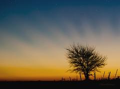 It's Gonna Be a Good Day (Pragmatic1111) Tags: morning sky orange sun tree oklahoma field sunrise fence stars dawn star nikon pasture sunburst daybreak d700 mygearandme