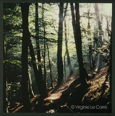 Le bois de la perche au matin ((Virginie Le Carr)) Tags: lumire bretagne fort contrejour