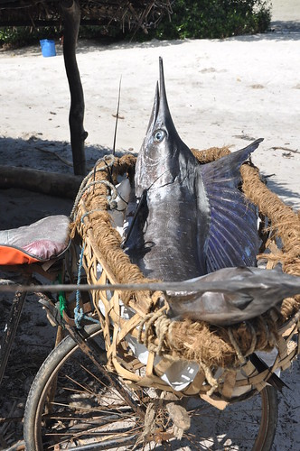 Sailfish on a bicycle