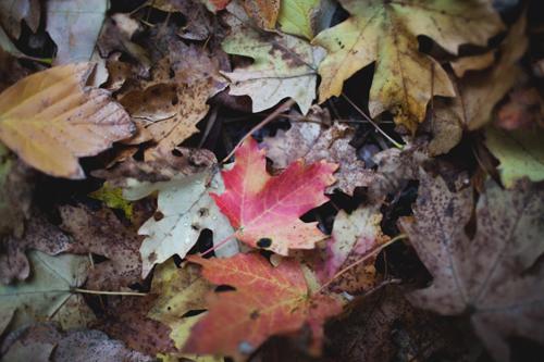 fall11 copy