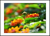 new life (e.nhan) Tags: life light flower art nature closeup spring colorful colours dof bokeh backlighting enhan