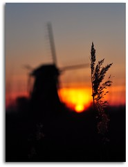 Sunset bokeh (powerfocusfotografie) Tags: light sunset sky sun mill reed netherlands windmill colors evening zonsondergang mood dof bokeh groningen avond lucht riet molen henk windmolen kleuren nikond90 100commentgroup powerfocusfotografie