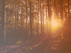 Morning Dawning (Callum Keogan) Tags: lighting morning sun nature forest sunrise photography dawn li woods