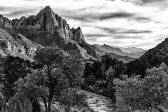 Autumn Climax B/W (James Marvin Phelps) Tags: autumn mountain southwest fall print poster photography utah zionnationalpark virginriver watchman mandj98 jmpphotography jamesmarvinphelps