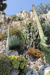 Monaco'ExoticGarden 11'0926 - 085 (studio-d) Tags: cactus monaco prickly succulents exoticgarden jardinexotiquedemonaco