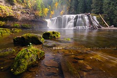 Falls in the Fall (pdxsafariguy) Tags: autumn trees mist forest river waterfall washington moss rocks logs nationalforest lewisriver giffordpinchot tomschwabel lowerlewisfalls lowerlewis